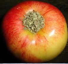 apple-pipe