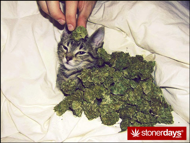stoners-pics-of-pot-marijuana-pictures (996)
