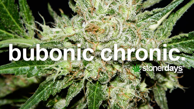 Stoner Dictionary - Bubonic Chronic | StonerDays