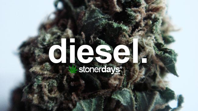 diesel-marijuana