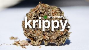 krippy-marijuana-term