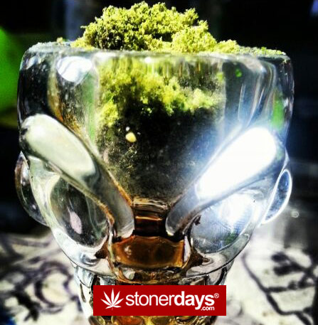 weed-cup