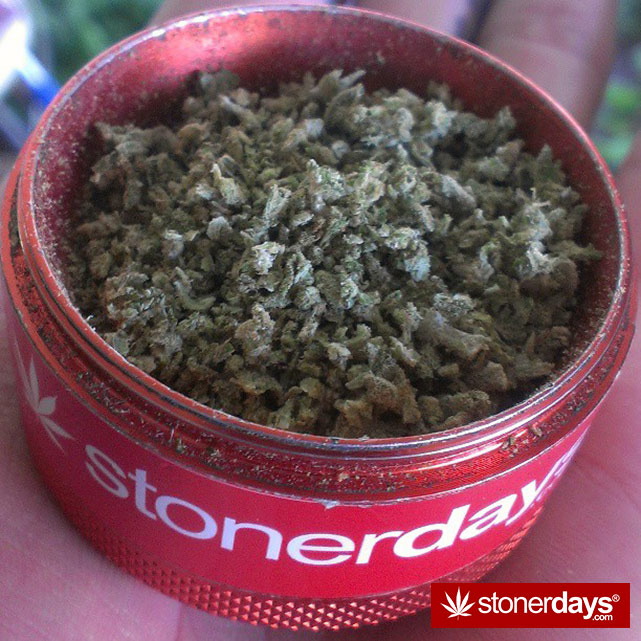 StonerDays-Stay-Blazed-Marijuana-420 (59)