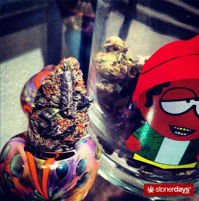 Marijuana-pictures (1)