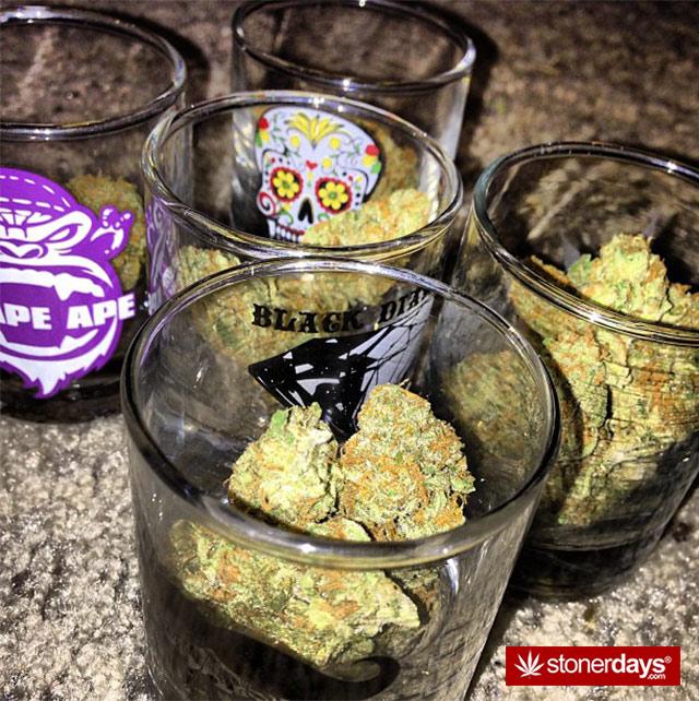 Marijuana-pictures (15)