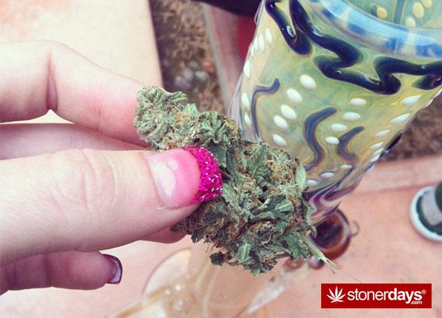 Marijuana-pictures (23)