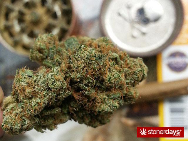Marijuana-pictures (6)