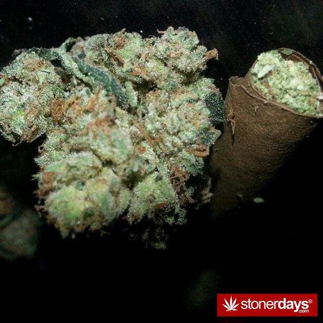 hot-stoners-bong-weed-pics (100)
