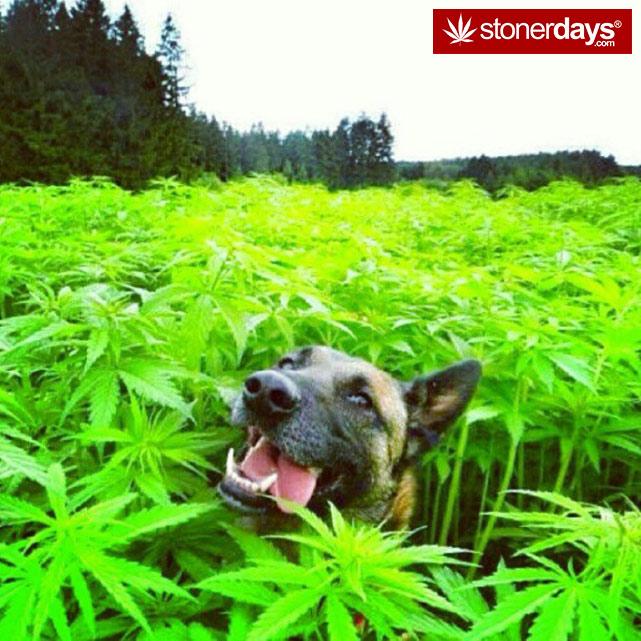 hot-stoners-bong-weed-pics (151)