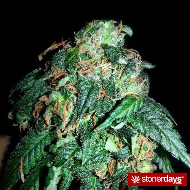 hot-stoners-bong-weed-pics (56)