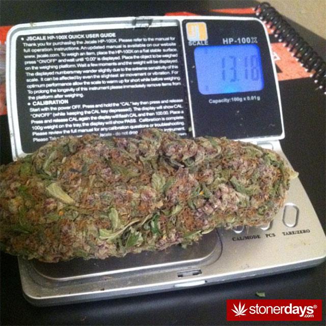 marijuana-dank-pictures (2)