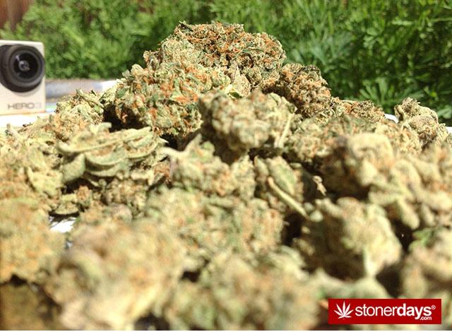 marijuana-pics-(31)