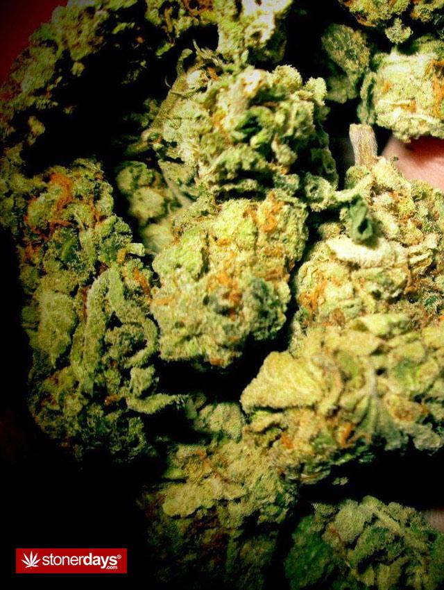 marijuana-pictures-(16)