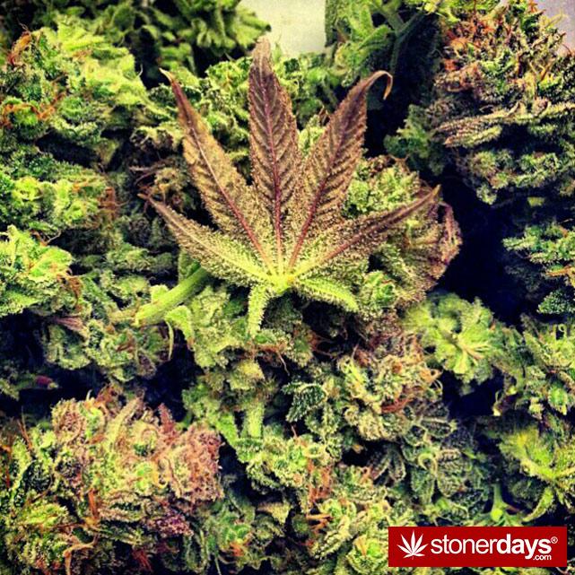 smoke-weed-marijuana-pictures (85)