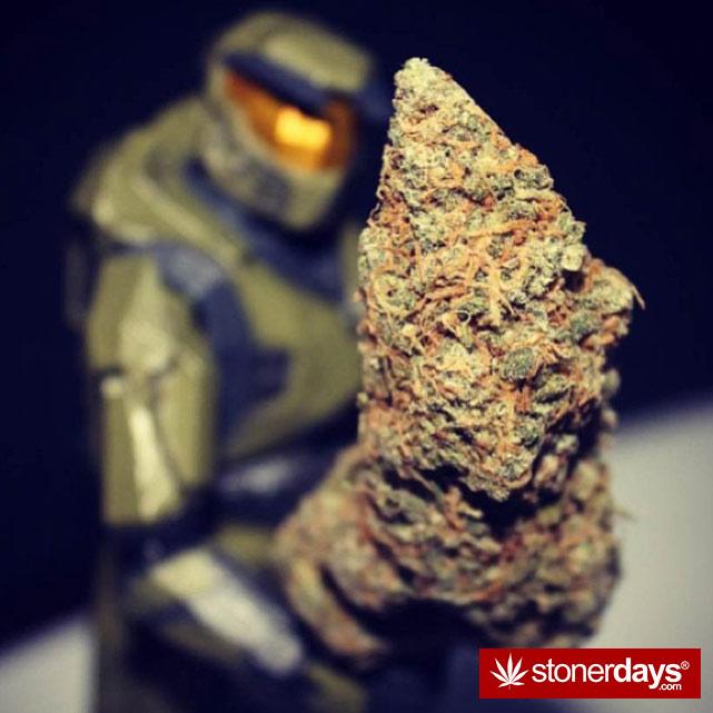 stoner-girls-smoking-weed (32)