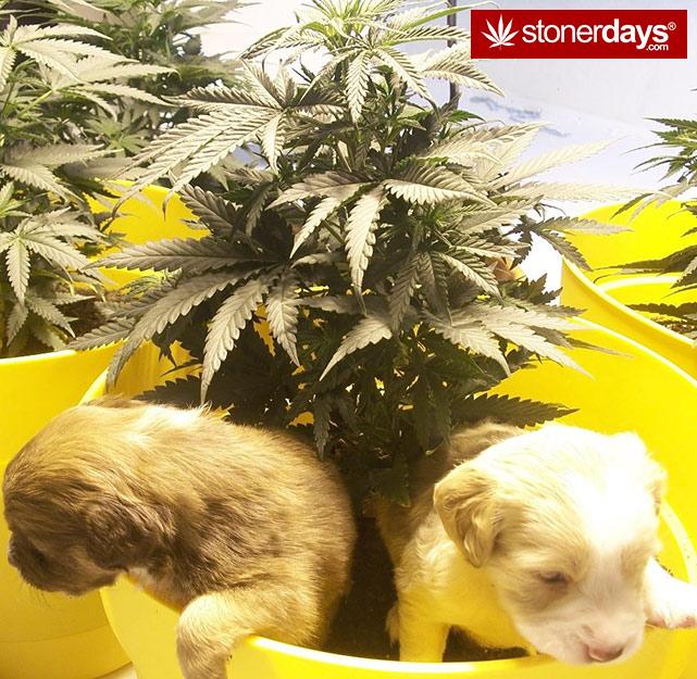 stoners-pics-of-pot-marijuana-pictures (1)