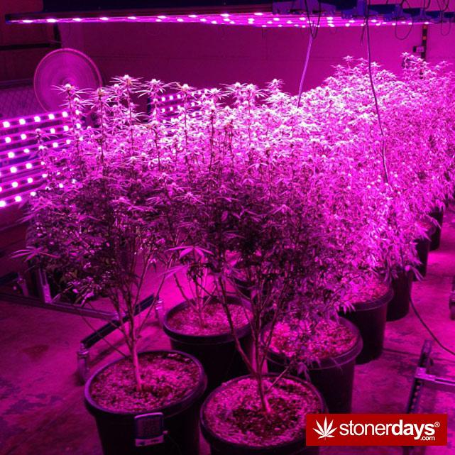 stoners-pics-of-pot-marijuana-pictures (149)