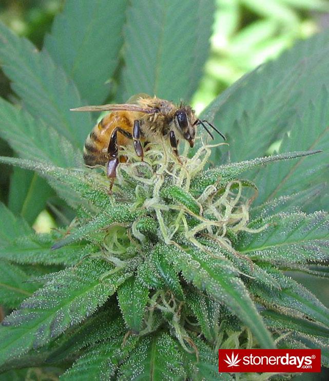 stoners-pics-of-pot-marijuana-pictures (728)