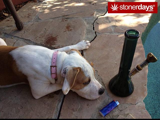 stoners-pics-of-pot-marijuana-pictures (960)