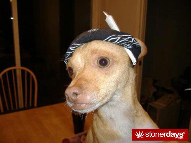 stoners-pics-of-pot-marijuana-pictures (990)