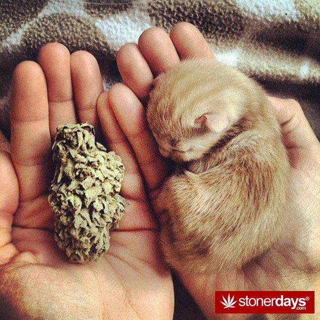 stoners-pics-of-pot-marijuana-pictures (995)