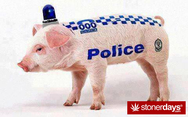 stoners-pics-of-pot-marijuana-pictures (997)