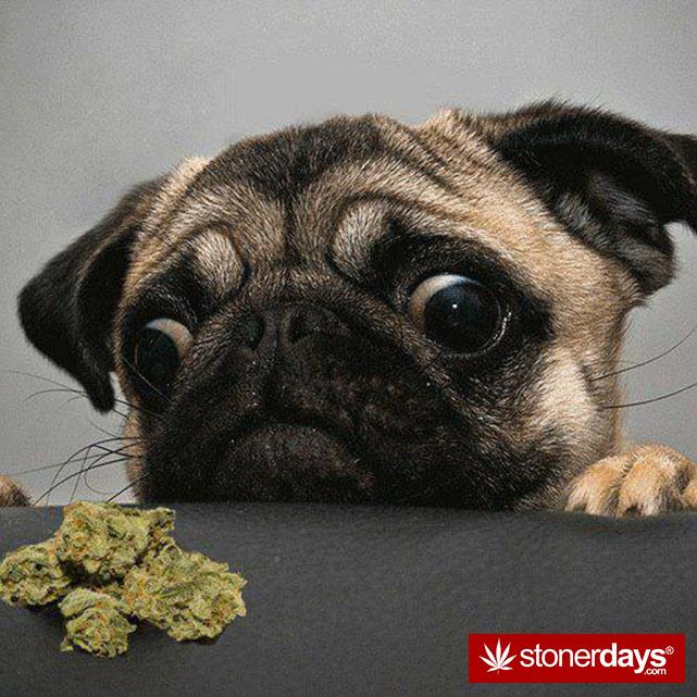 stoners-pics-of-pot-marijuana-pictures (998)