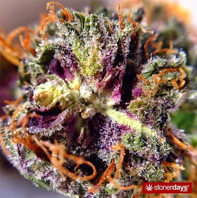 weed-pics-(24)