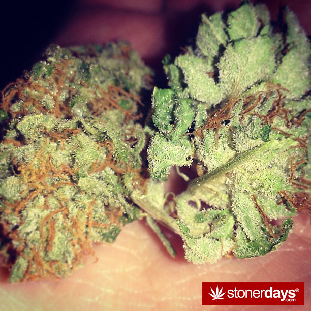 weed-pics-(40)