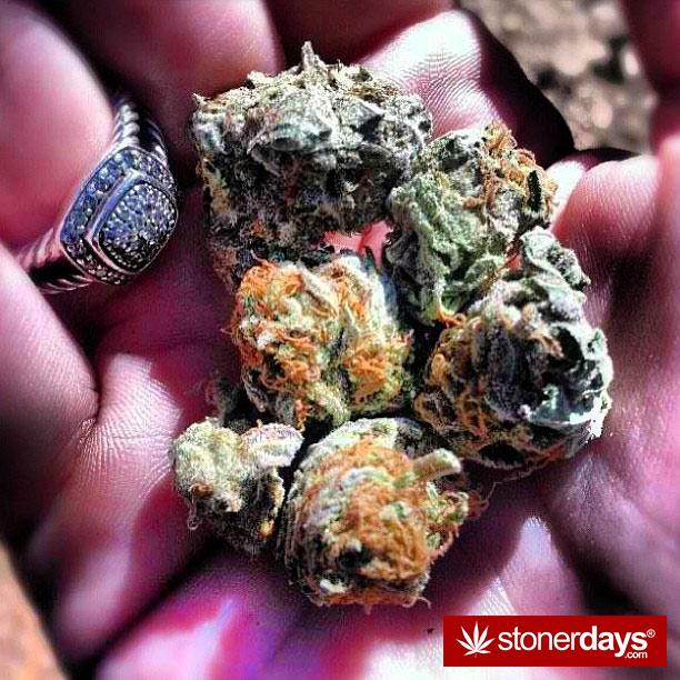 weed-pics-(42)