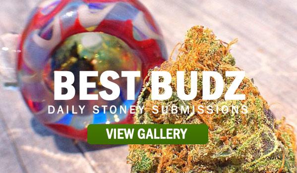 BEST-BUDZ-STONER