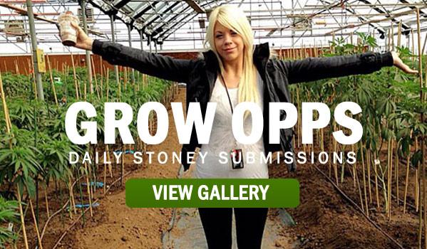 GROW-OPPS-STONER