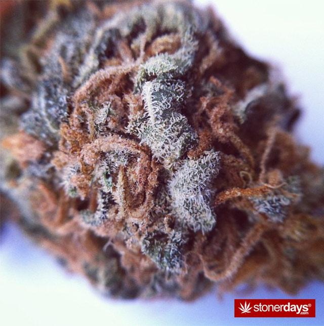 Marijuana-pictures (22)
