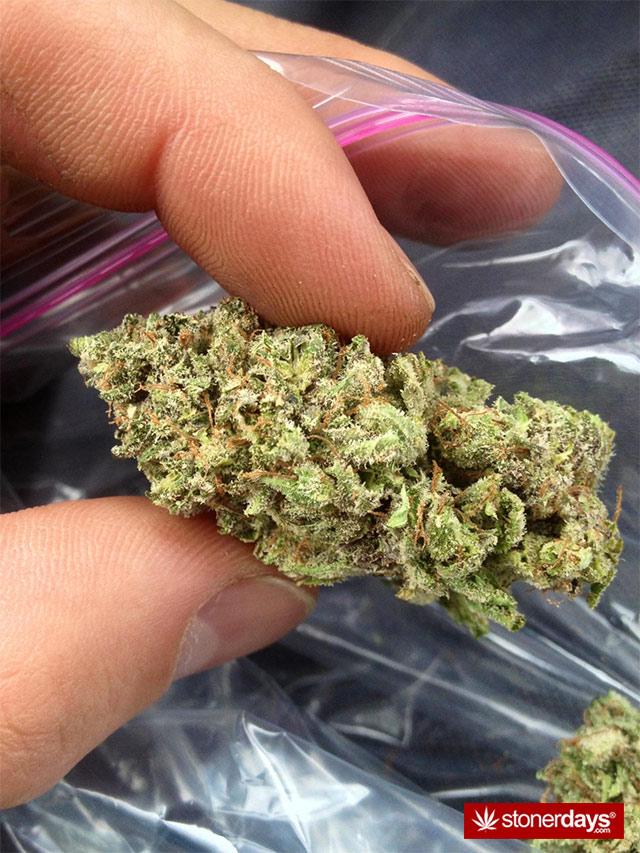 stoner-stoners-marijuana