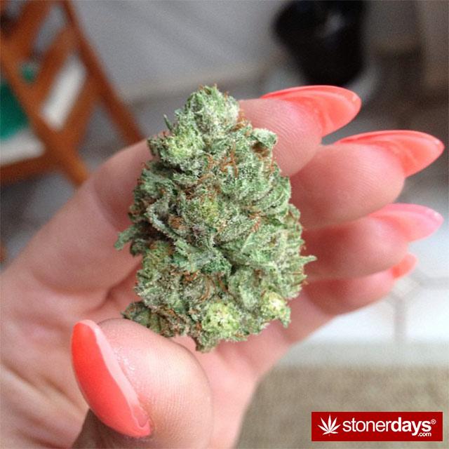 SMOKING-BONGS-WEED (19)