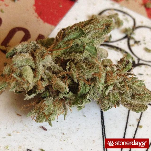 SMOKING-BONGS-WEED (22)