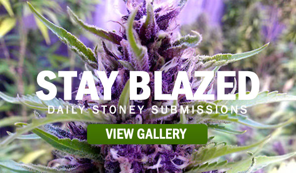 STAY-BLAZED-STONERDAYS