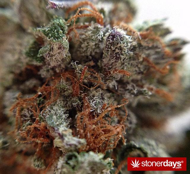 happy-420-stoned-marijuana (124)