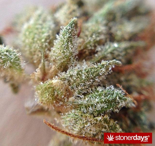 happy-420-stoned-marijuana (151)