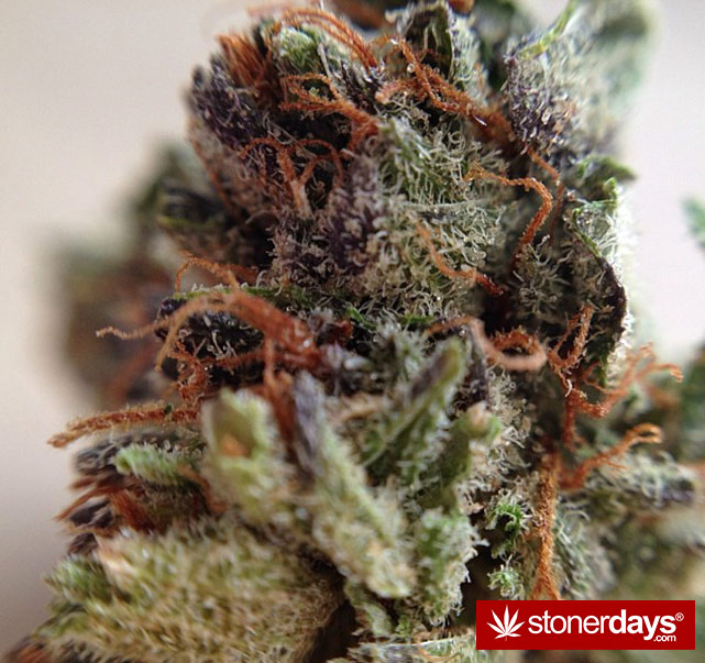 happy-420-stoned-marijuana (153)