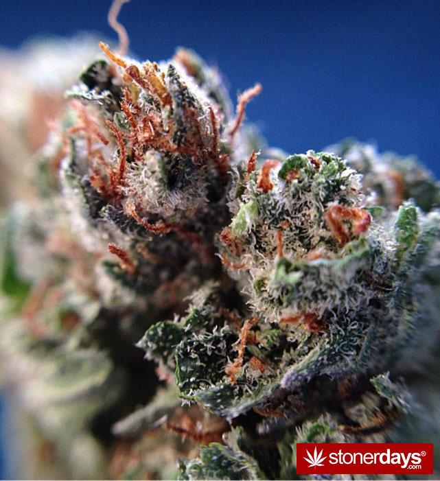 happy-420-stoned-marijuana (155)