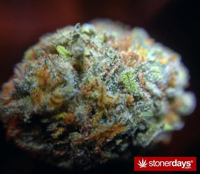 happy-420-stoned-marijuana (162)