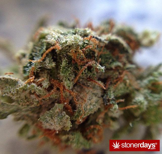 happy-420-stoned-marijuana (167)