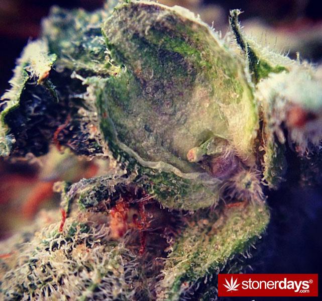 happy-420-stoned-marijuana (173)happy-420-stoned-marijuana (173)