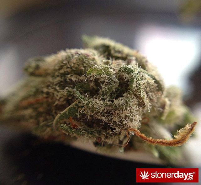 happy-420-stoned-marijuana (181)