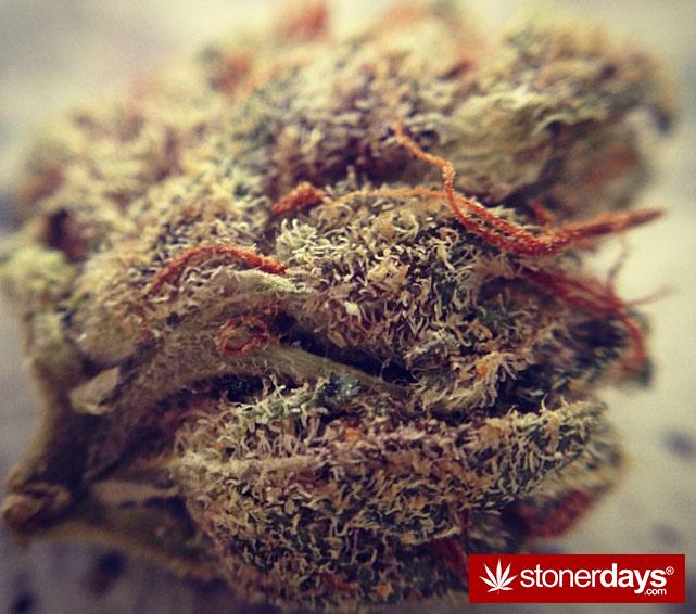 happy-420-stoned-marijuana (182)