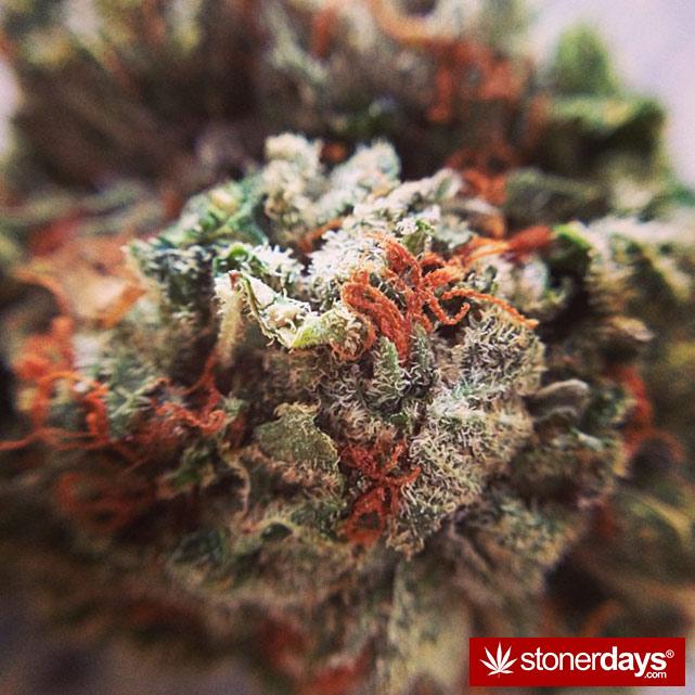 happy-420-stoned-marijuana (19)