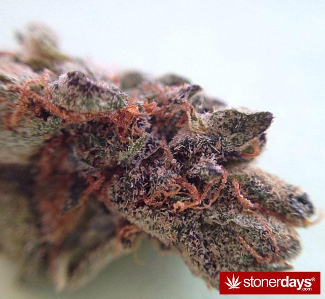happy-420-stoned-marijuana (200)