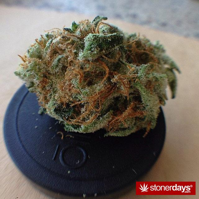 happy-420-stoned-marijuana (214)