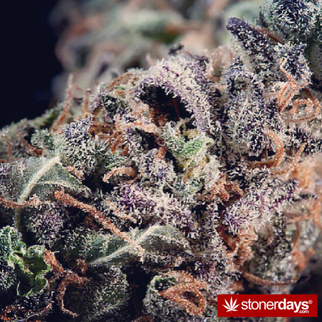 happy-420-stoned-marijuana (219)